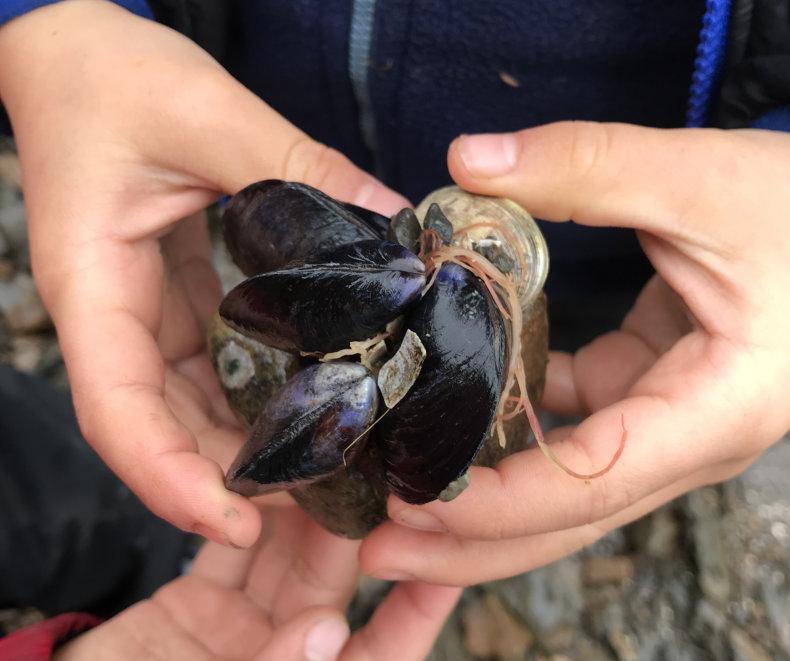 hands holding a shells
